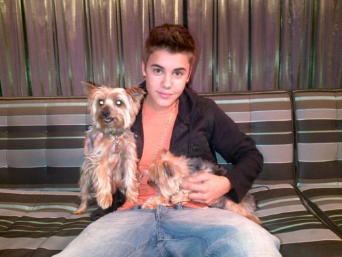 Justin-biebers-dogs